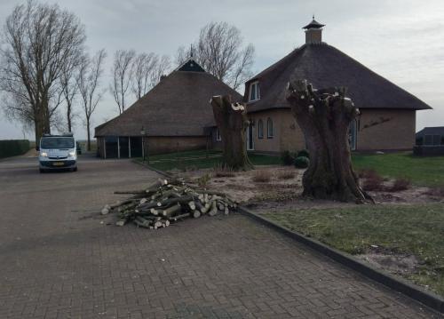 jorrit-hoekstra-boomverzorging-bomen-gesnoeid