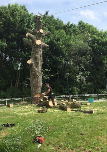 jorrit-hoekstra-boomverzorging-stam-omzagen