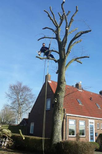 jorrit-hoekstra-boomverzorging-takken-uit-top