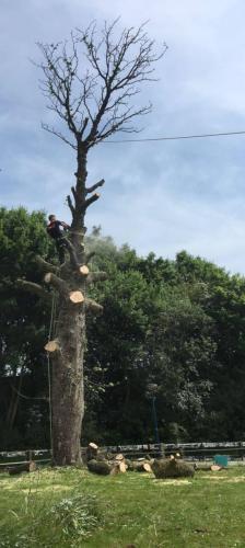 jorrit-hoekstra-boomverzorging-top-uit-boom