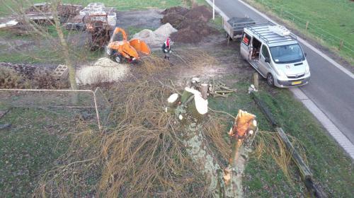 jorrit-hoekstra-boomverzorging-zicht-vanuit-boom