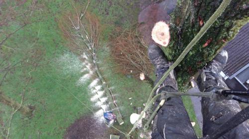 jorrit-hoekstra-boomverzorging-zicht-vanuit-kruin